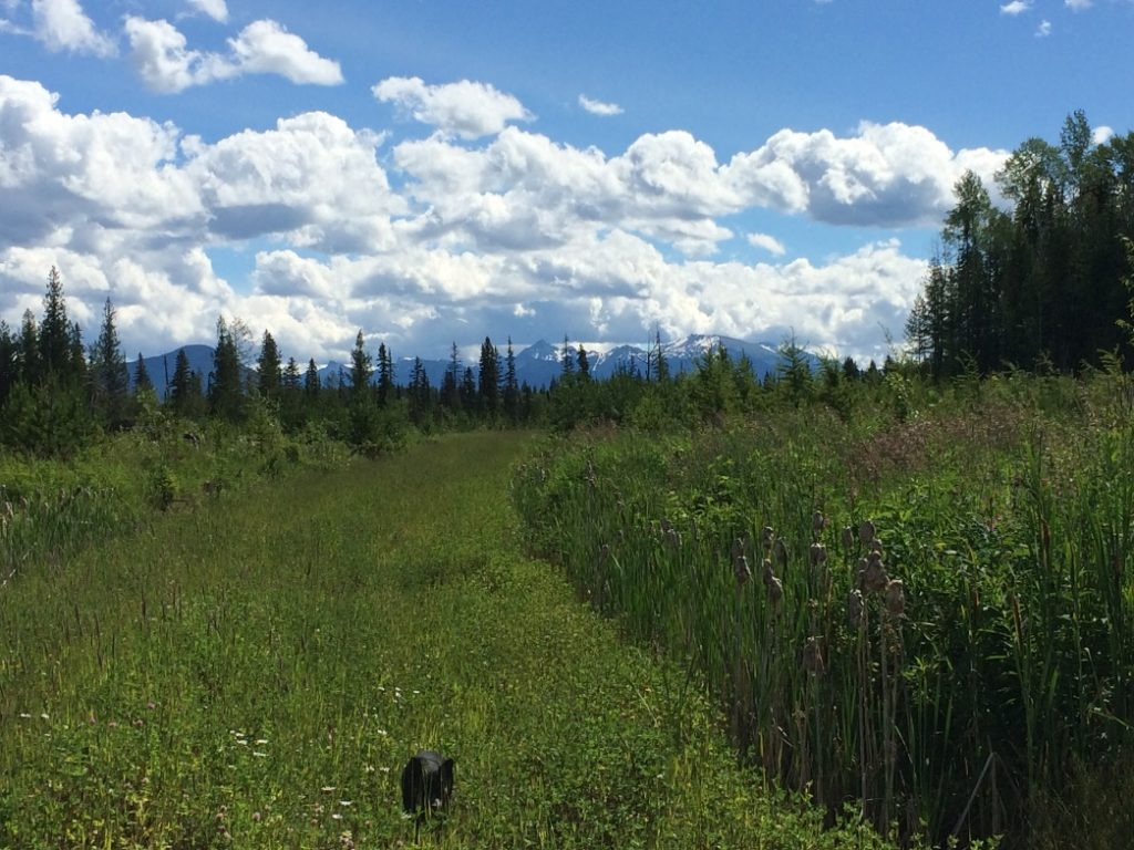 Figure 5. A great benefit of working in silviculture: the views. This day we were checking for brushing requirements in a few blocks near the town Horsefly (East of Williams Lake).