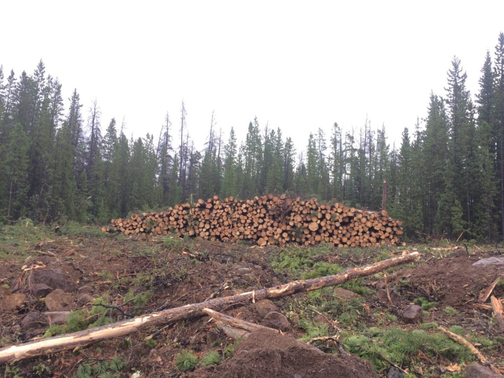 Figure 11. A skidded pile of wood waiting to be processed.