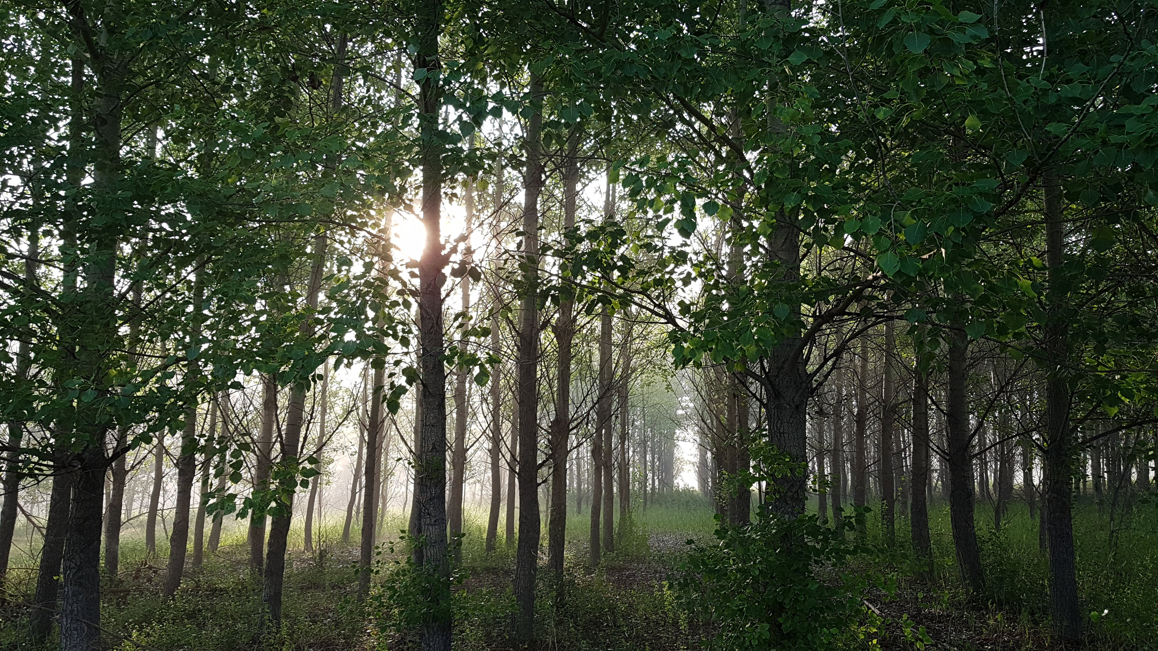 forest view of trees with sunlight shining through