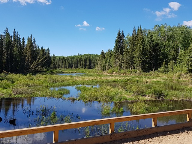 view of lake and forest off a birdge