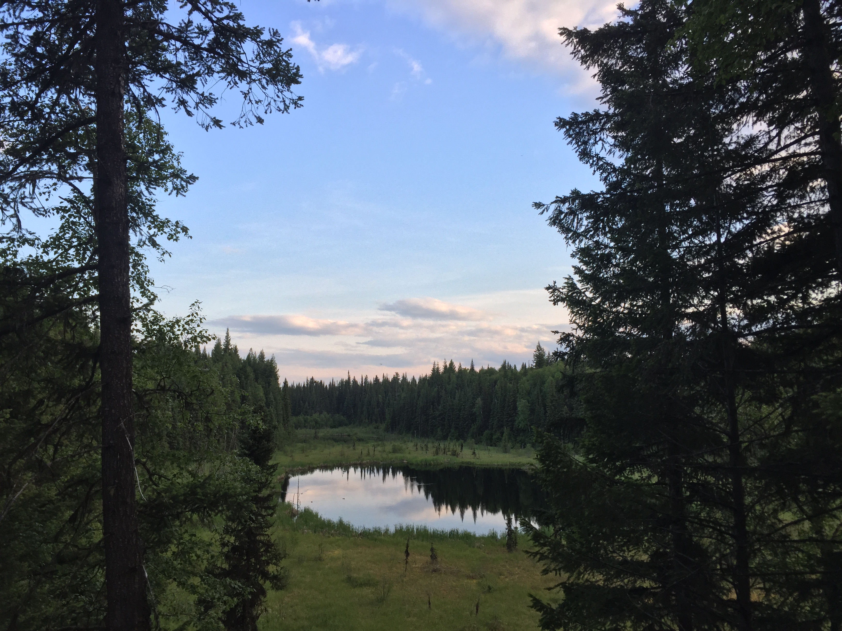 Wetland viewpoint from the Forests for the World/UNBC Connector trail.