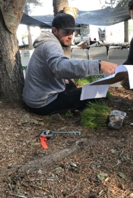 man measuring tree bundles