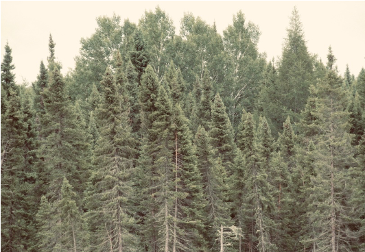 A picture of a dense forest.