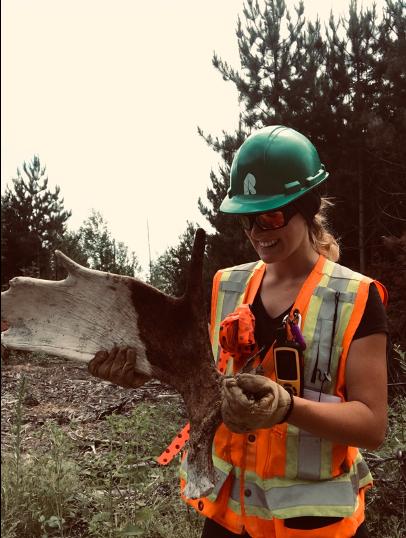 A worker examine a moose antler.