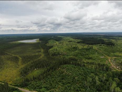 Overlook of a green landscape after harvest