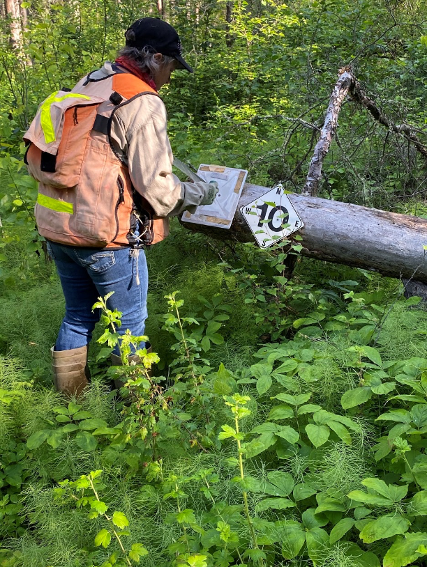 Worker replacing a sign within the forest.