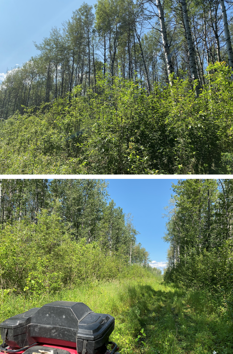 Photos of some of the trails within the forest.