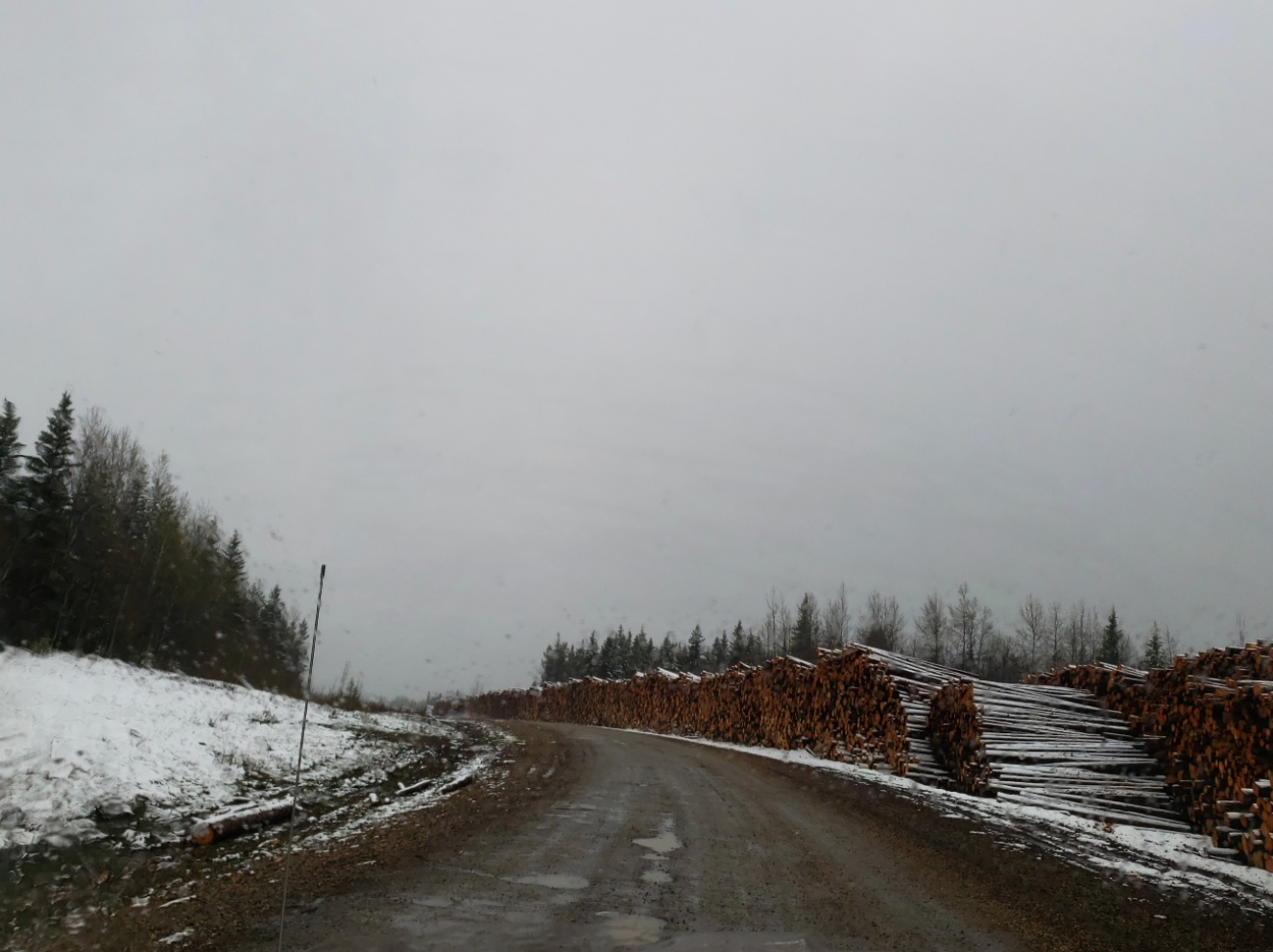 Dirt road, with evenly stacked logs on the side.