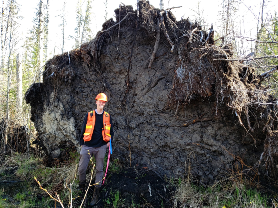 A reflagging worker standing beside an up rooted tree.