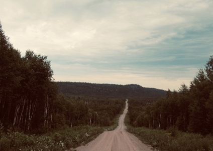 A road through the Black Spruce Forest