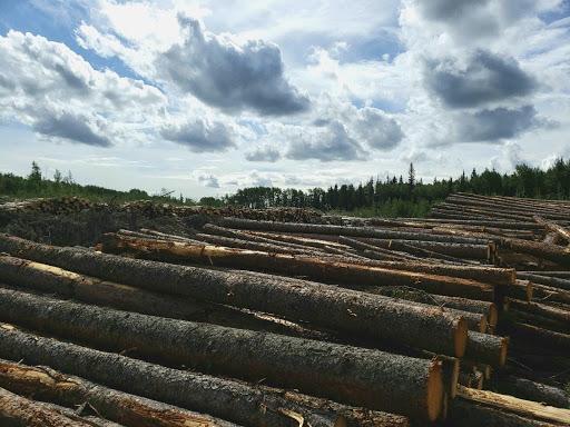 A Lumber pile.